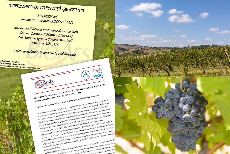 Mancinelli Vini - Passione per il territorio - Certificazioni