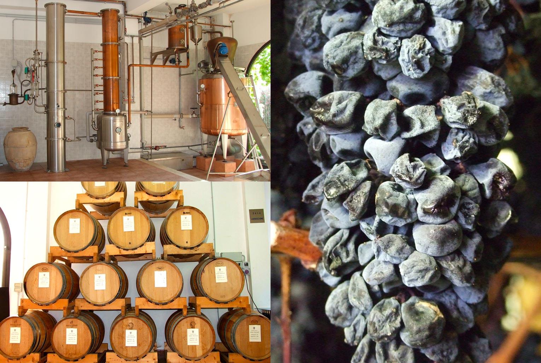 Mancinelli Vini - Passione per il territorio - Distillati