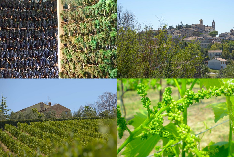 Mancinelli Vini - Passione per il territorio - Terre dei Goti - Morro d'Alba